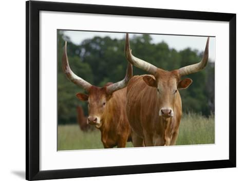 Cattle in the Pasture-DLILLC-Framed Art Print
