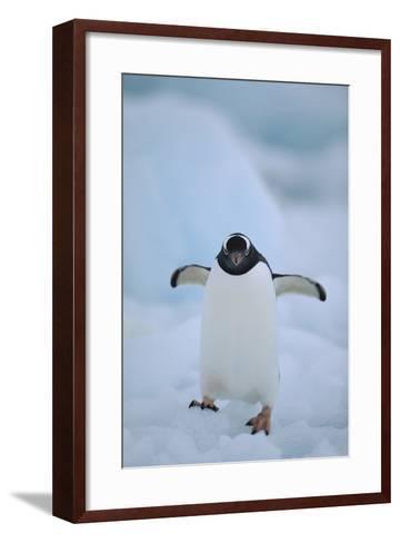 Gentoo Penguin Running-DLILLC-Framed Art Print