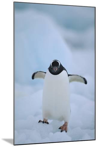 Gentoo Penguin Running-DLILLC-Mounted Photographic Print