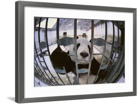 Panda in Cage-DLILLC-Framed Art Print