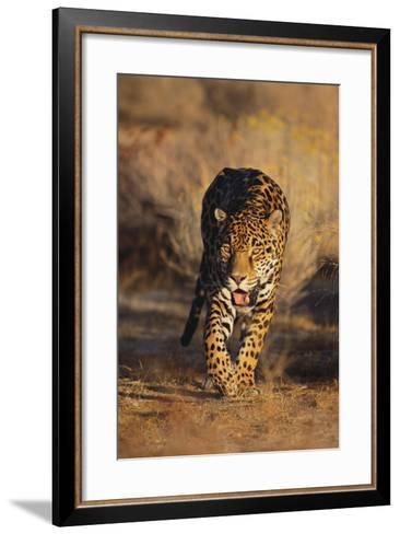 Jaguar-DLILLC-Framed Art Print