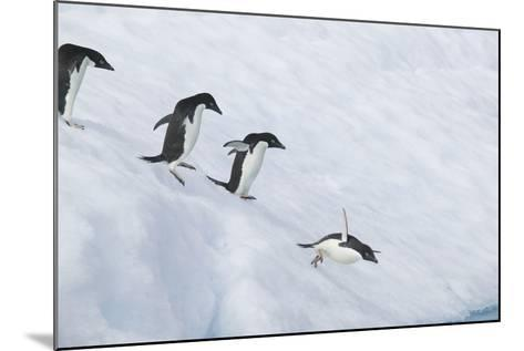 Adelie Penguins Jumping into the Sea-DLILLC-Mounted Photographic Print