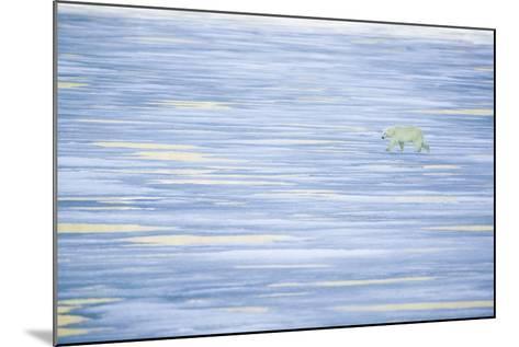 Polar Bear on a Sea of Ice-DLILLC-Mounted Photographic Print