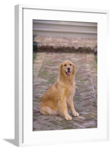 Golden Retriever-DLILLC-Framed Art Print