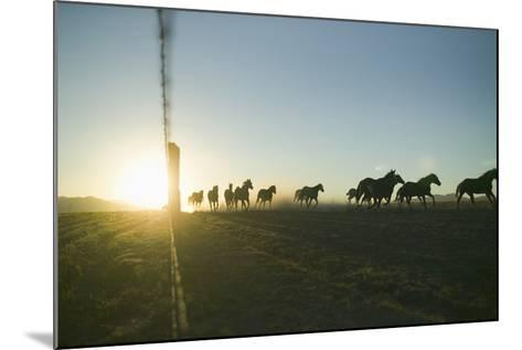 Quarter Horses Running by Fence Line-DLILLC-Mounted Photographic Print