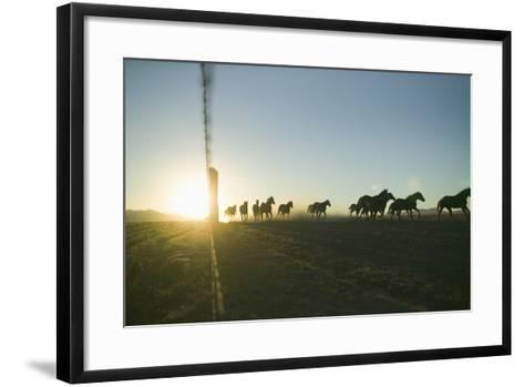 Quarter Horses Running by Fence Line-DLILLC-Framed Art Print