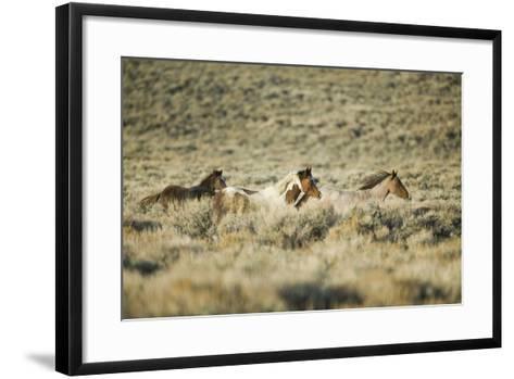 Wild Horses Running-DLILLC-Framed Art Print