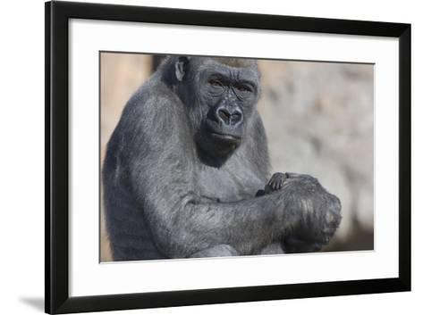 Gorilla with Baby-DLILLC-Framed Art Print