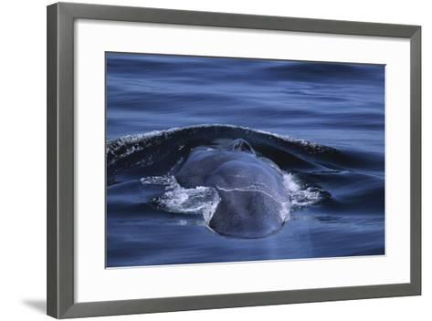 Blue Whale's Back-DLILLC-Framed Art Print
