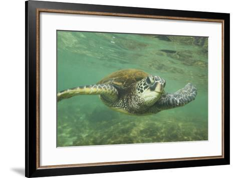 Green Sea Turtle-DLILLC-Framed Art Print