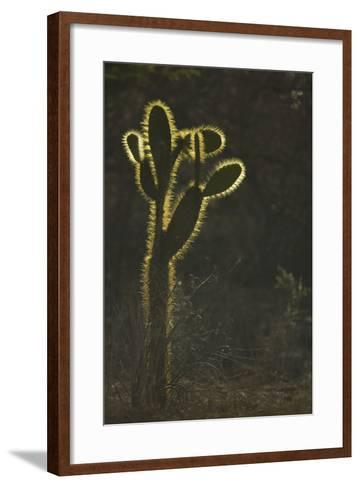 Opuntia Cactus with Spines Outlined by Sunlight-DLILLC-Framed Art Print