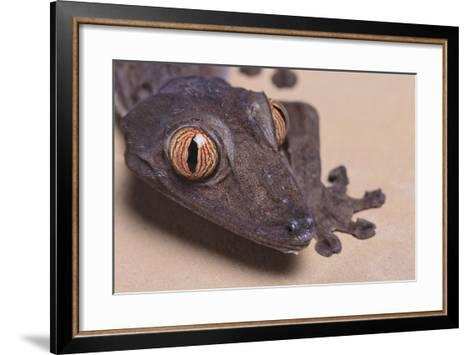 Madagascar Leaf-Tail Gecko-DLILLC-Framed Art Print