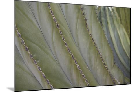 Spines of a Cardon Cactus-DLILLC-Mounted Photographic Print