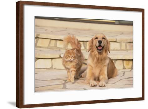 House Cat and Golden Retriever-DLILLC-Framed Art Print