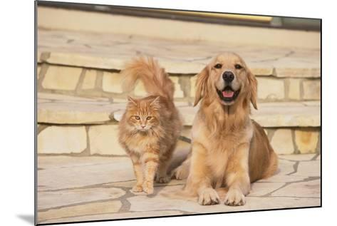 House Cat and Golden Retriever-DLILLC-Mounted Photographic Print