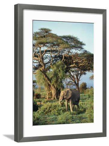 African Elephant-DLILLC-Framed Art Print