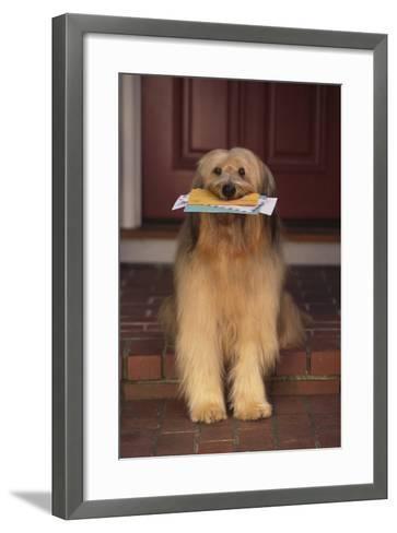 Shaggy Dog Fetching the Mail-DLILLC-Framed Art Print