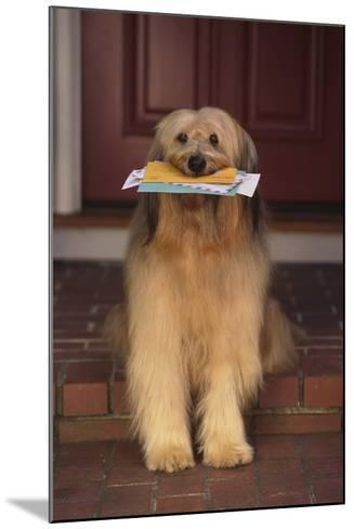 Shaggy Dog Fetching the Mail-DLILLC-Mounted Photographic Print