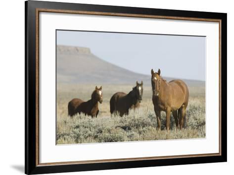 Wild Horses on Prairie-DLILLC-Framed Art Print