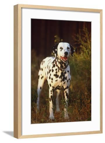 Dalmatian-DLILLC-Framed Art Print