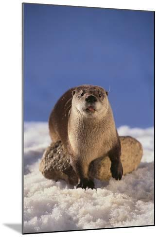 River Otter-DLILLC-Mounted Photographic Print