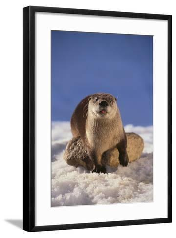 River Otter-DLILLC-Framed Art Print