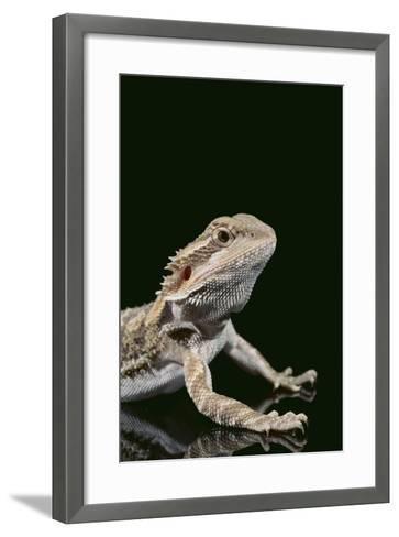 Bearded Dragon-DLILLC-Framed Art Print