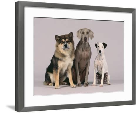 Gang of Dogs-DLILLC-Framed Art Print