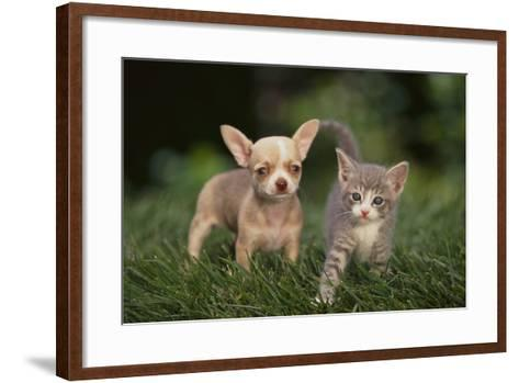Chihuahua Puppy and a Kitten-DLILLC-Framed Art Print