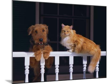 House Cat and Airedale Terrier-DLILLC-Mounted Photographic Print