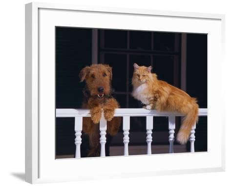House Cat and Airedale Terrier-DLILLC-Framed Art Print
