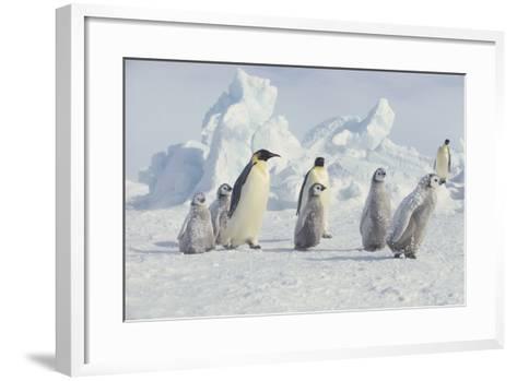 Emperor Penguins and Offspring-DLILLC-Framed Art Print