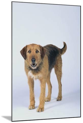 Mixed Breed Dog-DLILLC-Mounted Photographic Print