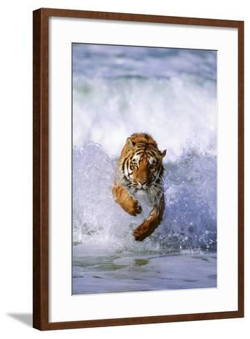 Tiger Running in Surf-DLILLC-Framed Art Print