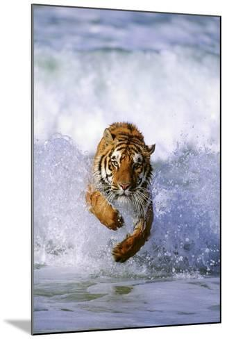 Tiger Running in Surf-DLILLC-Mounted Photographic Print