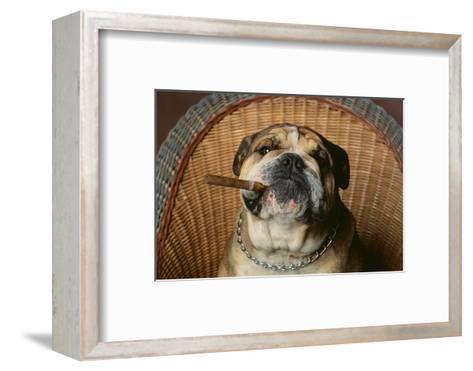 Bulldog Enjoying a Cigar-DLILLC-Framed Art Print