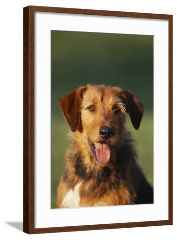 Mixed Breed Dog-DLILLC-Framed Art Print
