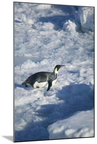 Emperor Penguin on His Belly-DLILLC-Mounted Photographic Print