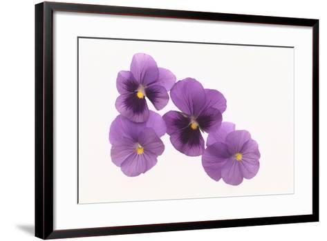 Pansies-DLILLC-Framed Art Print