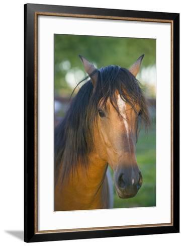 Peruvian Paso Horse-DLILLC-Framed Art Print