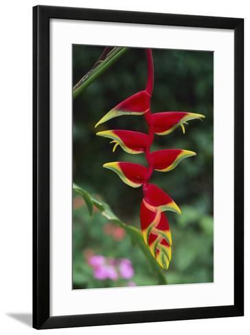 Hanging Heliconia-DLILLC-Framed Art Print