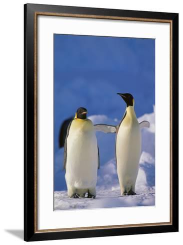 King Penguins-DLILLC-Framed Art Print
