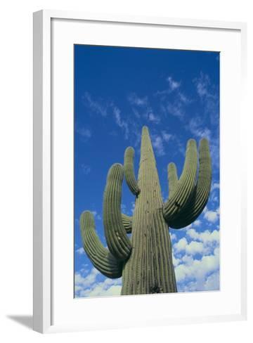 Saguaro Cactus-DLILLC-Framed Art Print