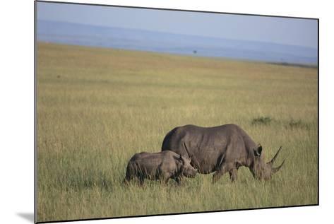 Black Rhinoceros-DLILLC-Mounted Photographic Print