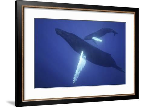 Humpback Whale Mother and Calf-DLILLC-Framed Art Print
