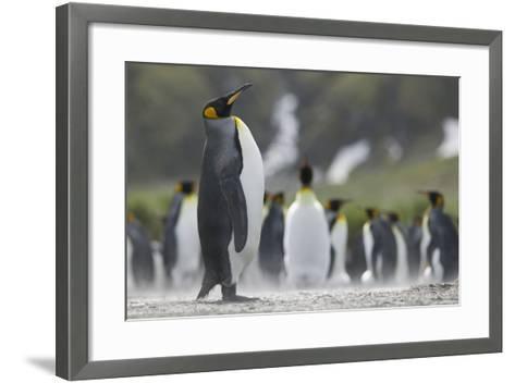 King Penguin Looking Up-DLILLC-Framed Art Print