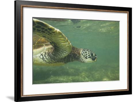 Green Sea Turtle-DLILLC-Framed Art Print