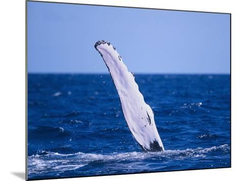 Humpback Whale's Fin-DLILLC-Mounted Photographic Print