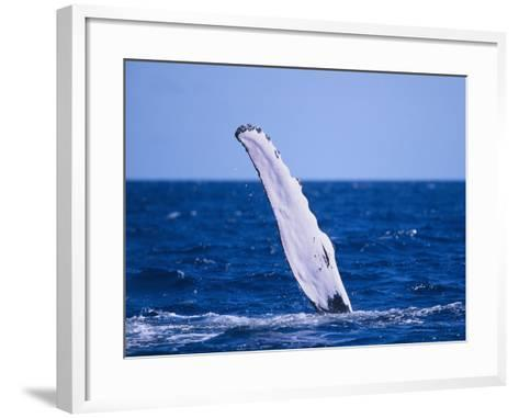 Humpback Whale's Fin-DLILLC-Framed Art Print
