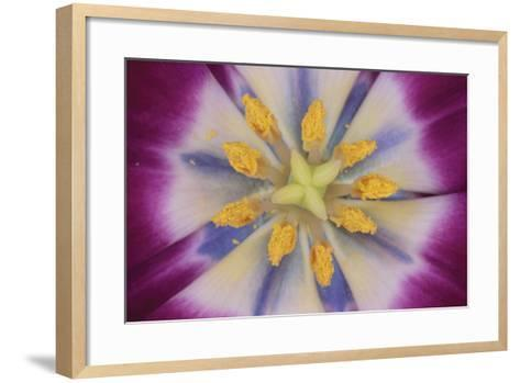 Tulip-DLILLC-Framed Art Print